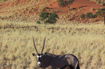 The Great wonders of Namibia