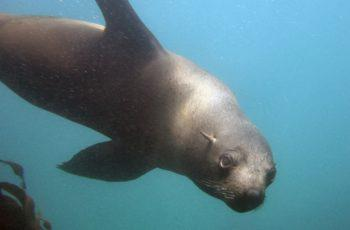Namibia and The Cape Fur Seal