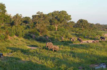 Kruger, Swaziland & KwaZulu Natal Guided Tour