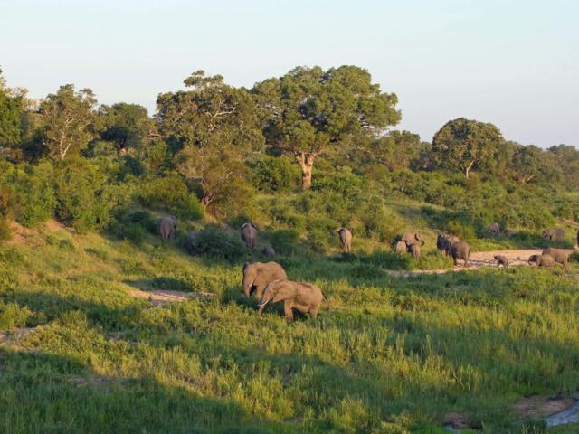 Big 5 safari destination