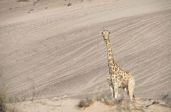 Namibia Luxury Fly In featuring Hoanib Skeleton Coast Camp