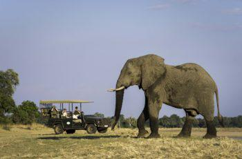 Botswana & Vic Falls Fly-in Safari