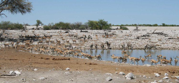 Etosha – a Brief look back