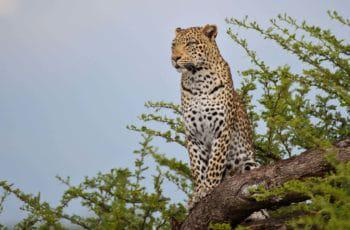 Honeymoon Botswana & Vic Falls