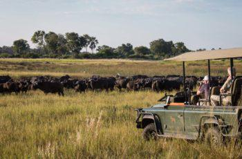 Highlights of Botswana