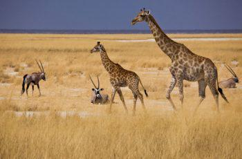 Namibia Responsible Tourism Highlights