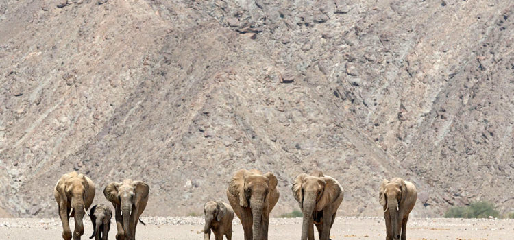 Namibian Tourism and what the industry is asking of the Government